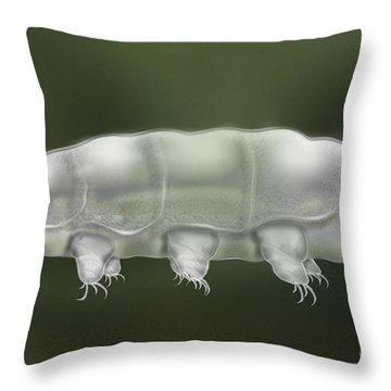 Water Bear Tardigrada - Waterbear Tardigrade  - Scientific Illustration Throw Pillow