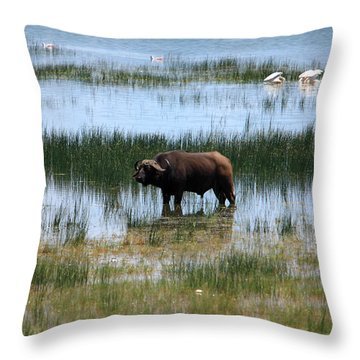 Water Buffalo At Lake Nakuru Throw Pillow