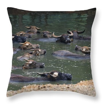 Water Buffalo Throw Pillow by Chris Flees