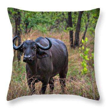 Water Buffalo Throw Pillow