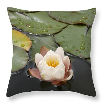 Throw Pillow featuring the photograph Water Lilly by Haleh Mahbod