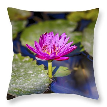 Water Lily 5 Throw Pillow by Scott Campbell