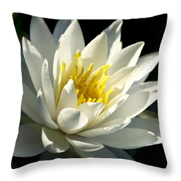 Water Lily Throw Pillow by Christina Rollo