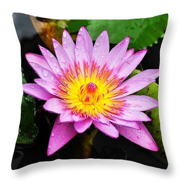 Water Lily Throw Pillow by Denise Bird