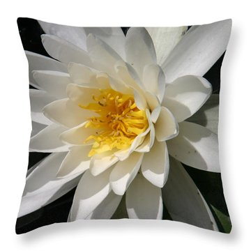 Water Lily  Throw Pillow by Denyse Duhaime