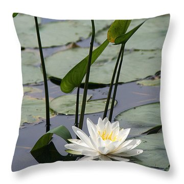 Water Lily In Bloom Throw Pillow