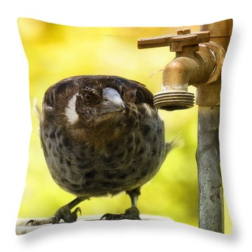 Throw Pillow featuring the photograph Water Please 02 by Kevin Chippindall