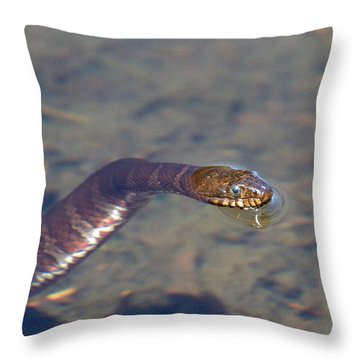Water Snake Throw Pillow by Karol Livote