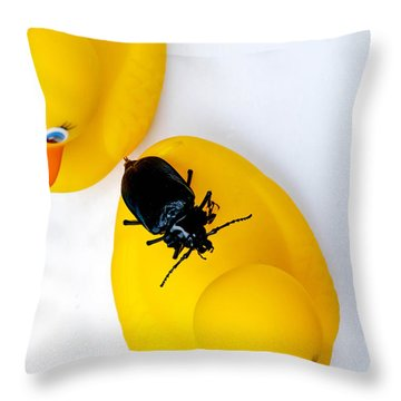 Waterbug On Rubber Duck - Aerial View Throw Pillow by Amy Cicconi