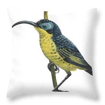Wattled False Sunbird Throw Pillow by Anonymous