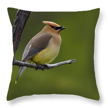 Wax On Throw Pillow by Tony Beck