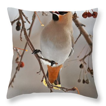 Waxing Eating Throw Pillow by Lloyd Alexander