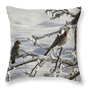 Waxwing Couple Throw Pillow