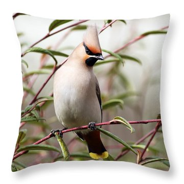 Waxwing Throw Pillow by Grant Glendinning