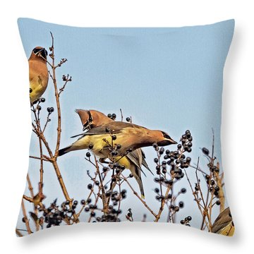 Throw Pillow featuring the photograph Waxwings And Berries by Constantine Gregory