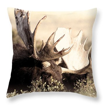 Wear A Crown Throw Pillow