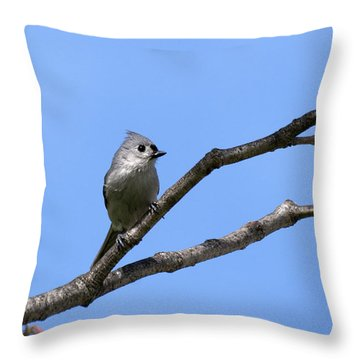 Weary Wings Throw Pillow by Christina Rollo