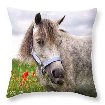 Welsh Pony Lulu Throw Pillow