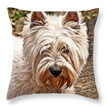 Throw Pillow featuring the photograph West Highland White Terrier by Robert L Jackson