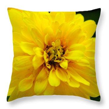 West Virginia Marigold Throw Pillow by Melissa Petrey