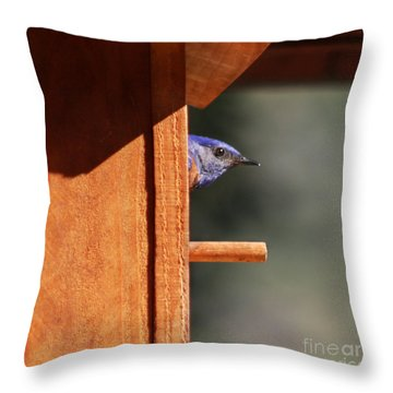 Throw Pillow featuring the photograph Western Bluebird At Nest by Bob and Jan Shriner