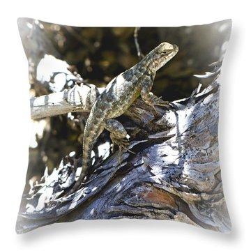 Western Fence Lizard Aka Blue-belly Lizard Throw Pillow
