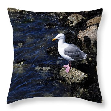 Throw Pillow featuring the photograph Western Gull On Rocks by Susan Wiedmann