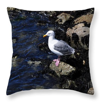 Western Gull On Rocks Throw Pillow