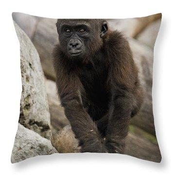 Western Lowland Gorilla Baby Throw Pillow by San Diego Zoo