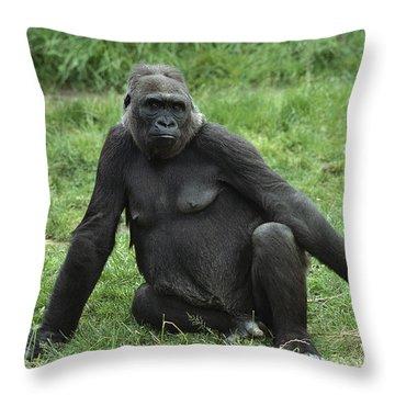 Western Lowland Gorilla Female Throw Pillow by Gerry Ellis