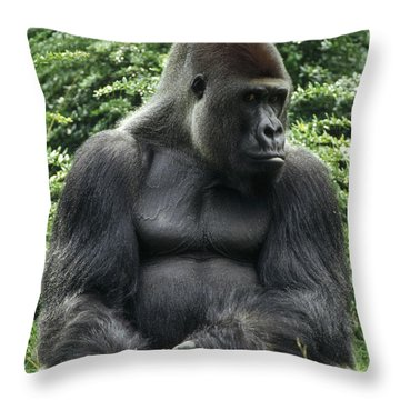 Western Lowland Gorilla Male Throw Pillow by Konrad Wothe