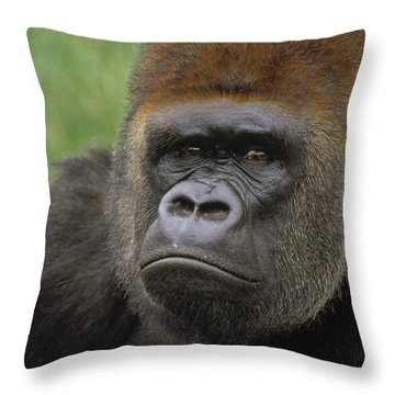 Western Lowland Gorilla Silverback Throw Pillow by Gerry Ellis