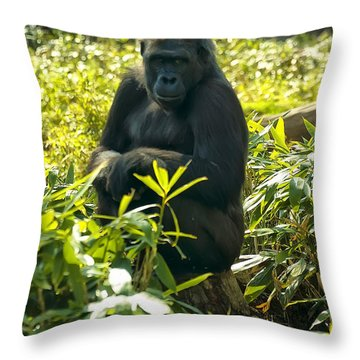 Western Lowland Gorilla Sitting On A Tree Stump Throw Pillow by Chris Flees