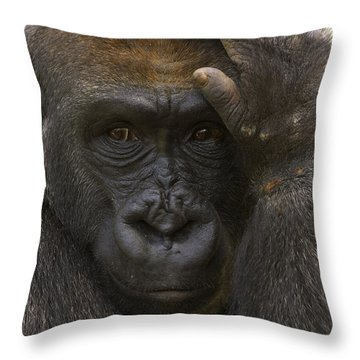 Western Lowland Gorilla With Hand Throw Pillow by San Diego Zoo