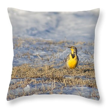 Western Meadowlark Throw Pillow by Alan Hutchins