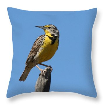 Western Meadowlark Perching Throw Pillow by Bob and Jan Shriner
