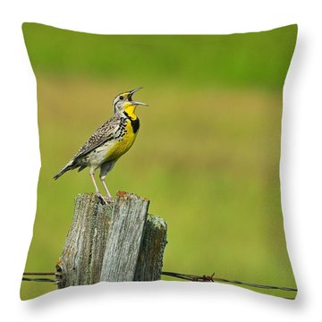 Western Meadowlark Throw Pillow by Tony Beck