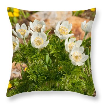Throw Pillow featuring the photograph Western Pasqueflower And Buttercups Blooming In A Meadow by Jeff Goulden
