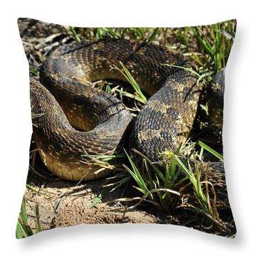 Throw Pillow featuring the photograph Western Plains Hognose Snake by Karen Slagle