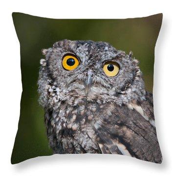 Western Screech Owl No. 3 Throw Pillow