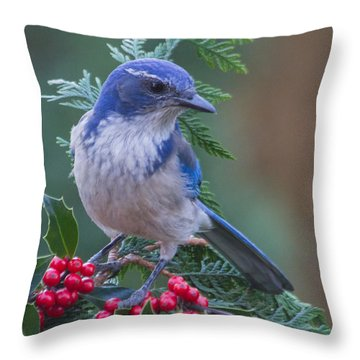 Western Scrub Jay 2 Throw Pillow by Angie Vogel