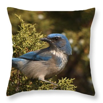 Western Scrub Jay Throw Pillow by James Peterson