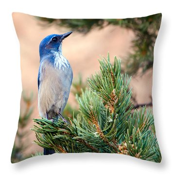 Western Scrub Jay Throw Pillow
