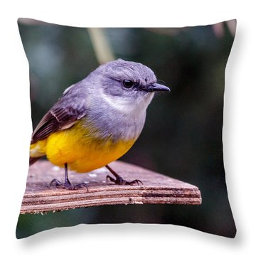 Western Yellow Robin Throw Pillow
