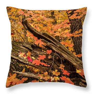 Westfork Foilage Throw Pillow by Tom Kelly