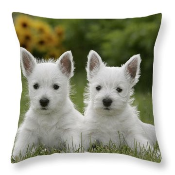 Westie Puppies Throw Pillow by Rolf Kopfle