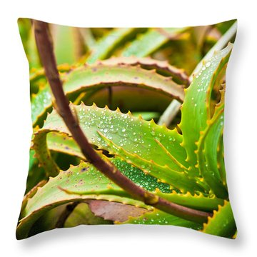 After The Rain Throw Pillow by Melinda Ledsome