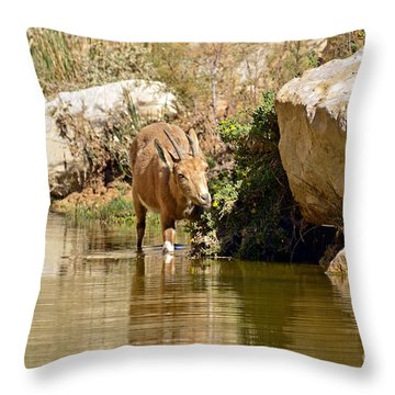 Wet And Delicious Meal Throw Pillow