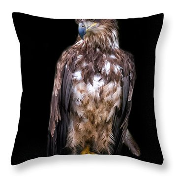 Wet Feathers Throw Pillow