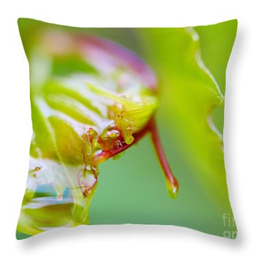 Wet Grape Leaf  Throw Pillow